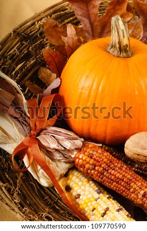A colorful orange pumpkin is nestled in Indian Corn for a traditional Fall or Thanksgiving decoration - stock photo