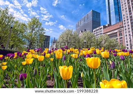 A colorful tulip bed of yellow and magenta flowers against the Chicago skyline.