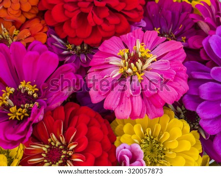 A colorful zinnia bouquet with mixed colors.