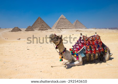 A colorfully saddled camel waits for its owner in front of the pyramids with a beautiful sky of Giza in Cairo, Egypt. Horizontal - stock photo