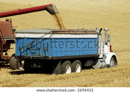 a combine harvesting the wheat crops in the rolling hills of the Palouse area of southeastern Washington state, summer 2006, unloading to a truck in the field - stock photo