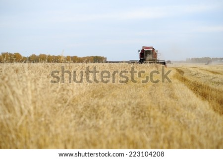 A combine harvests grain harvest in the fall - stock photo