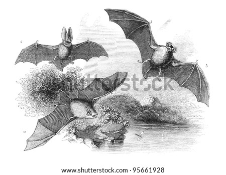 A. Common Bat B. Great Bat C. Long-Eared Bat. Engraving by unknown artist from english Penny Magazine printed in 1843. - stock photo