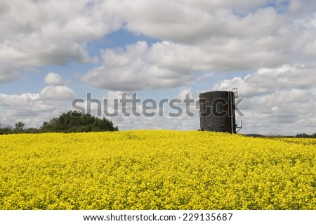 A common site on Canola fields close to the Alberta - Saskatchewan border