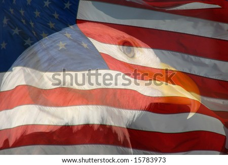 A composite of two photos taken by the author - bald eagle and American flag combined into one photo. - stock photo