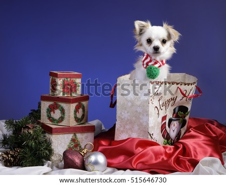 A concept image of a cute little dog in a christmas gift bag.