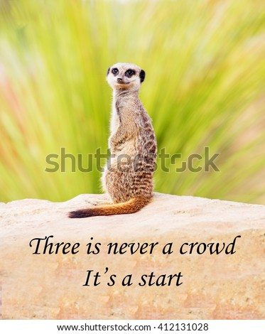 A concept picture of a meerkat saying that a team of people can make more rapid progress than an individual, emphasising the importance of teamwork - stock photo