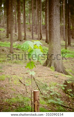 A coniferous forest with a leaf in focus - stock photo