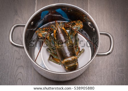 A cooked lobster in the kitchen.