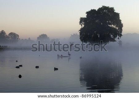 A cool blue misty morning at a lake in Bushy Park, London, England.  Taken on a cold autumn day. - stock photo