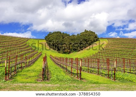 A copse of trees forms a heart shape on the scenic hills of the California Central Coast where vineyards grow a variety of fine grapes for wine production, near Paso Robles, CA. on scenic Highway 46. - stock photo
