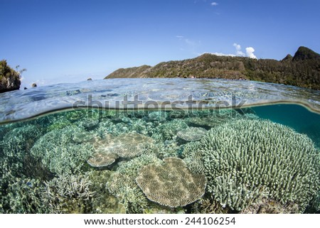 A coral reef grows in shallow water in Raja Ampat, Indonesia. This region is known as the heart of the Coral Triangle and contains more marine life than anywhere else on Earth. - stock photo