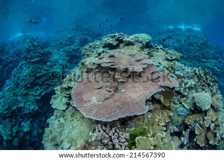 A coral reef, made up primarily of reef-building corals, thrives near a remote island in the Solomon Islands. This part of Melanesia is known for its high marine biological diversity. - stock photo
