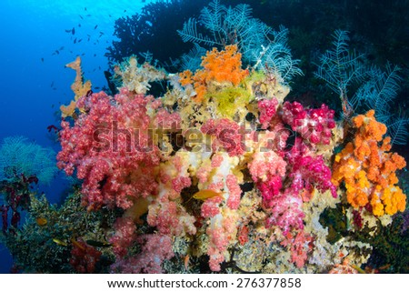 A coral scene from Raja Ampat Indonesia with several small fish around it.