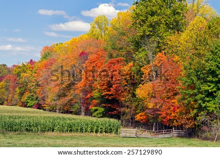 A cornfield is bordered by a wood with a varied and vibrant collection of fall foliage colors with a rustic gate in the foreground. - stock photo