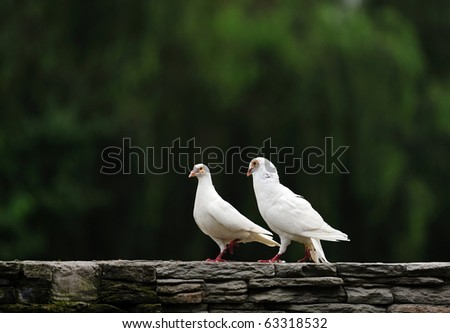a couple doves going home. - stock photo