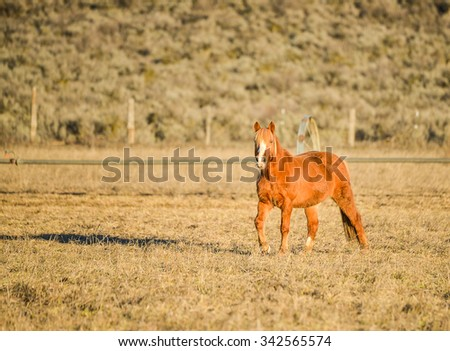 a couple hoses looking at the camera in the field farm with mountain background on late of the day in countryside. - stock photo