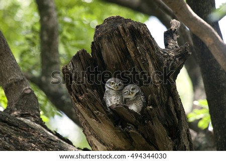 A couple lovely owl  in a tree
