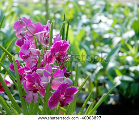 A couple of nice wild orchid flowers - stock photo