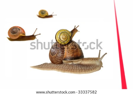 a couple of snails in a snail race - stock photo
