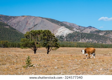 a cow and two trees in a meadow