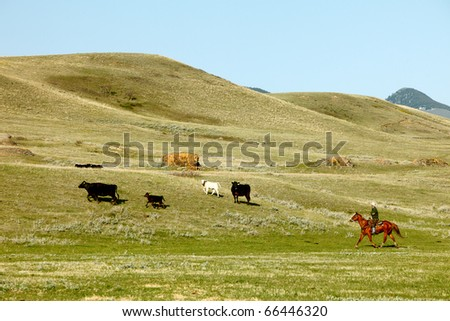 A cowboy rounds up cattle on a ranch while riding a horse. - stock photo