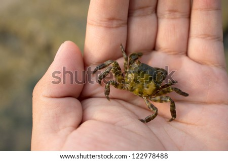 A crab in the  men's hands.