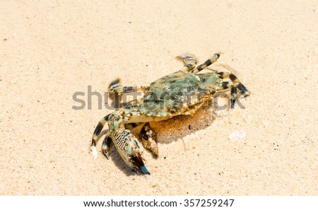 A Crab on the Sand at the Maine Shore in Thailand