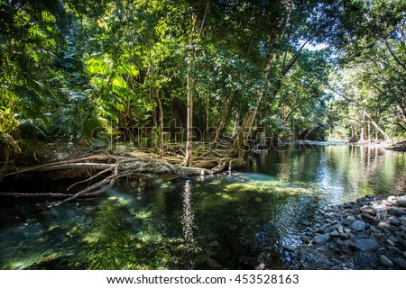 A creek nth of Cape Tribulation in the Daintree region of Queensland, Australia