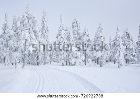 A cross-country trail through a frozen landscape near Trysil in Norway.