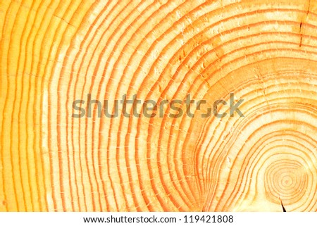 a cross section view of a log showing annual growth rings in the wood - stock photo