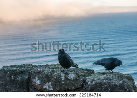 a crow on the rock with cloudy background in the morning. - stock photo