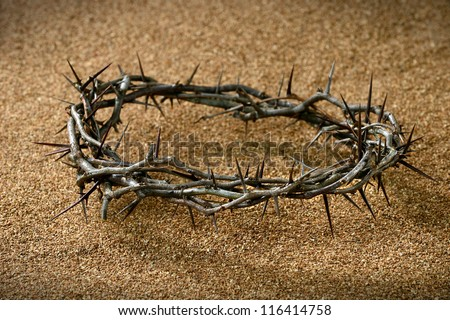 A crown of thorns on sandy background - stock photo