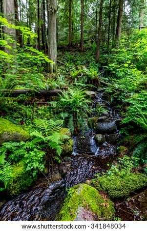 A Crystal Stream Flowing Through a Beautiful Primeval Rain Forest with Mystical Cedar Trees Covered with Moss in the Pacific Northwest.