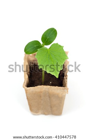 A cucumber's plant in paper box - stock photo