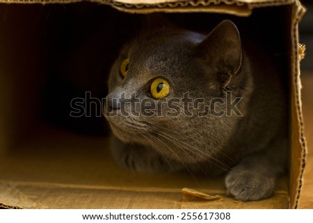 A curious cat peeks out from a cardboard box - stock photo