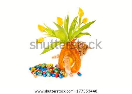 A curious ginger cat playing with colored Easter chocolate eggs through a vase with yellow tulips, isolated on white - stock photo