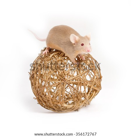 A curious little mouse sits on the golden decorative ball