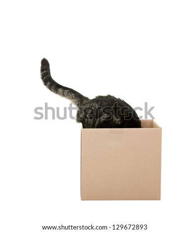A curious tabby cat checking out a cardboard box.   Shot on white background.