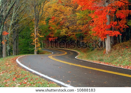A curvy road on a rainy day during fall of the year.