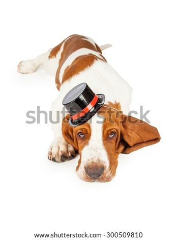 A cute and adorable Basset Hound puppy wearing a black top hat trimmed in red.  Dog is laying facing the camera.  - stock photo