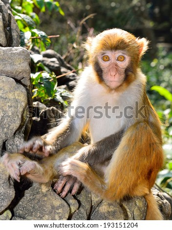 A cute baby monkey sitting on the rock