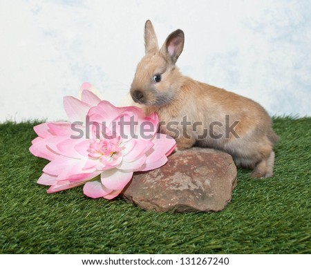 A cute baby rabbit standing on a rock with a big pink Flower beside her. - stock photo