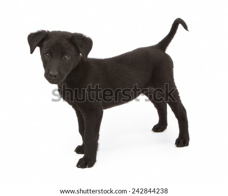 A cute black mixed breed puppy standing to the side