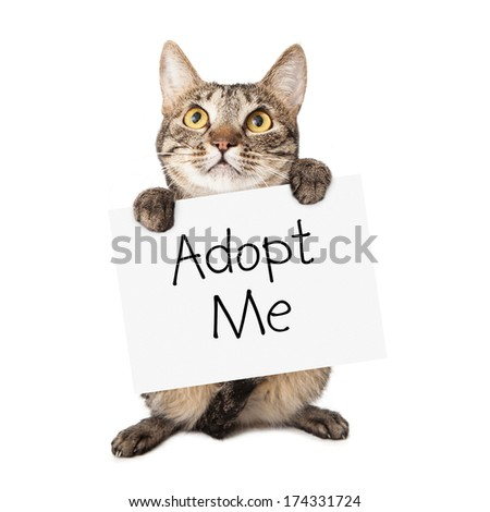 A cute brown and black striped cat holding up a white cardboard sign with the words Adopt Me on it - stock photo