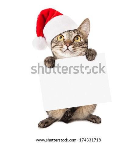A cute brown and black striped cat wearing a red santa hat holding up a blank white cardboard sign for you to enter your holiday message onto - stock photo