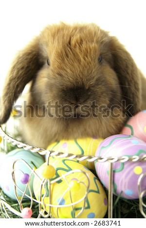 A cute brown bunny sitting in an easter basket - stock photo