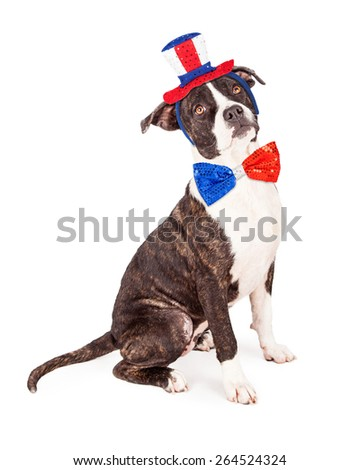 A cute bull terrier crossbreed dog sitting while wearing a patriotic red, white and blue hat and bow tie - stock photo
