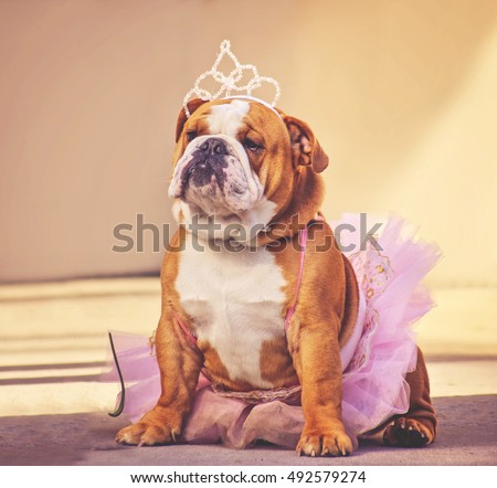 a cute bulldog dressed up in a pink tutu and a princess tiara crown toned with a retro vintage instagram filter app or action effect