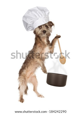 A cute Cairn Terrier mixed breed dog wearing a chef hat while holding a cooking pot and wooden spoon - stock photo